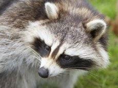 Animal care De Huttenheugte Dalen Center Parcs