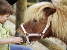 Pony ride Parc Sandur Emmen Center Parcs