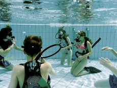 Cours PADI Open Water, 3 jours De Kempervennen Westerhoven Center Parcs