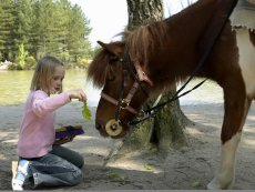 Mon Poney Bispinger Heide Soltau Center Parcs
