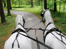 Center Parcs Excursions: Covered wagon ride Bispinger Heide Soltau Center Parcs