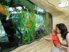 Discovering Fishes Le Bois aux Daims Poitiers Center Parcs
