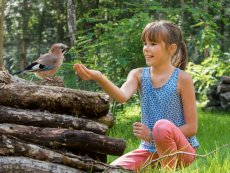 Discovering Birds Le Bois aux Daims Poitiers Center Parcs
