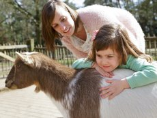 The Children's Farm Le Bois aux Daims Poitiers Center Parcs
