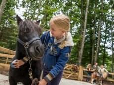 Horse riding Les Bois-Francs Verneuil sur Avre Center Parcs
