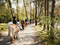 Pony ride Les Ardennes Vielsalm Center Parcs