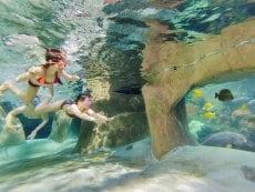 Snorkeling De Vossemeren Lommel Center Parcs