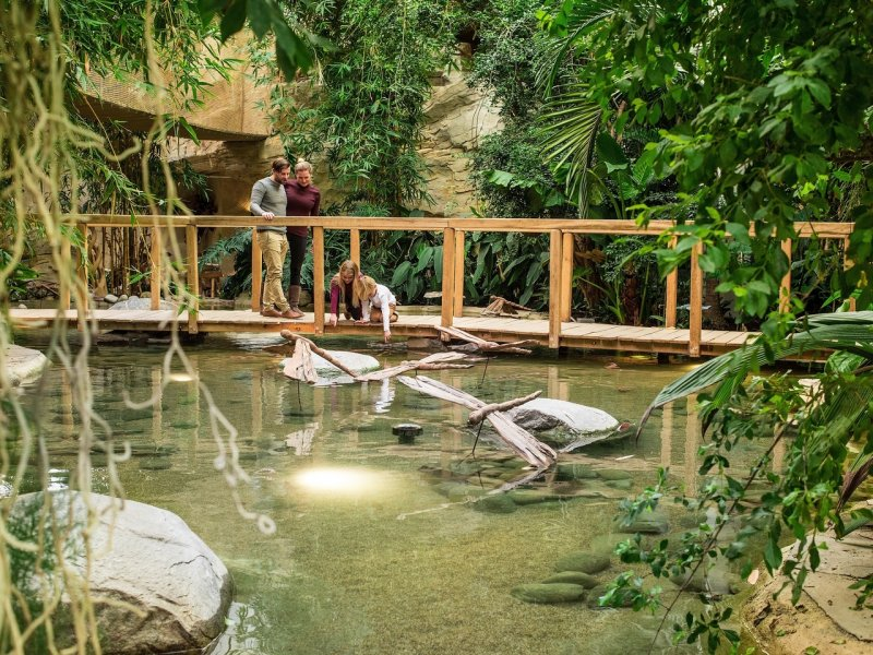 Jungle Thema Slaapkamer : Cottages duitsland park allgäu center parcs